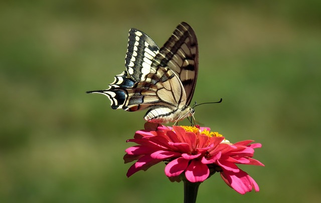 Nature, Butterfly, Oct Queen Queen, Light, Insect