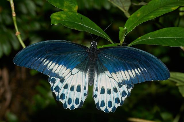 Butterfly, Nature, Wing, Insect, Outdoors