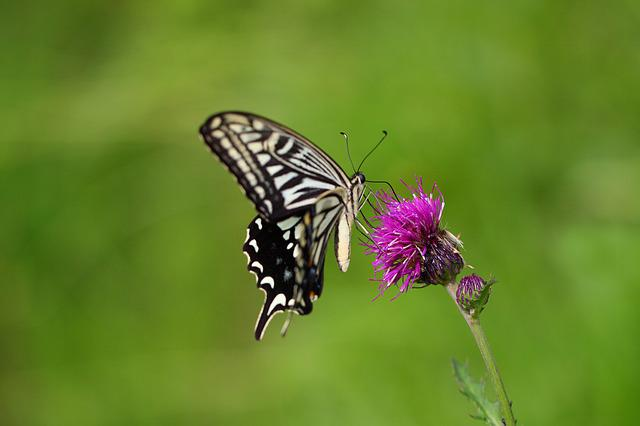 Butterfly, Nature, Insects, Outdoors, Flowers, Summer