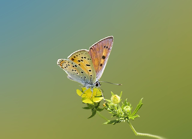 Butterflies, Insect, Butterfly, Nature, Macro, Forest