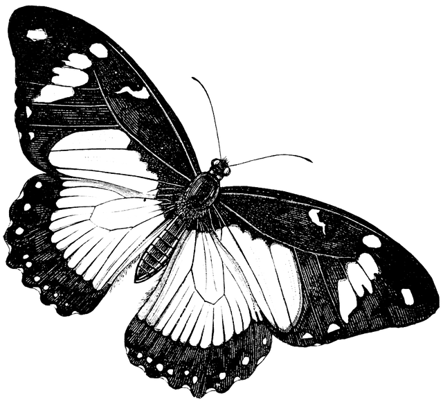 Butterfly, Nature, Animal