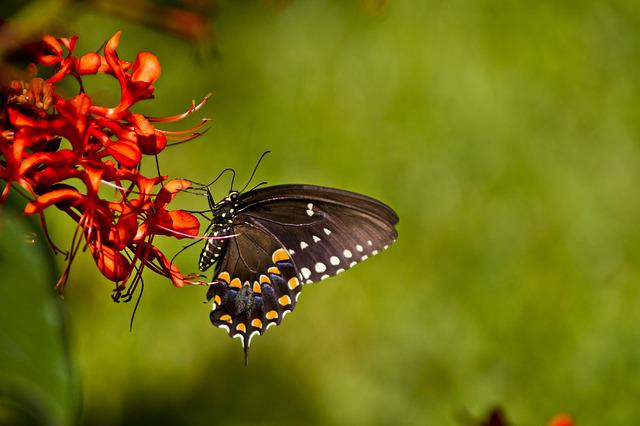 Butterfly, Florida, Nature, Macro