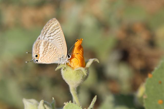 Nature, Butterfly, Outdoors, Insect, Animal