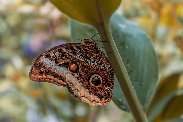 Butterfly, No Person, Insect, Nature