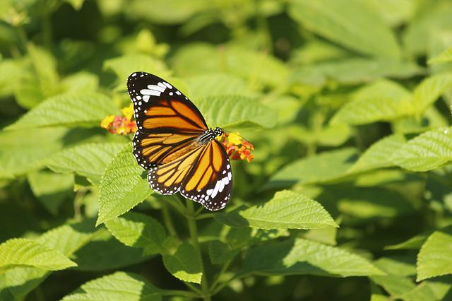Nature, Butterfly, Summer, Leaf, Outdoors