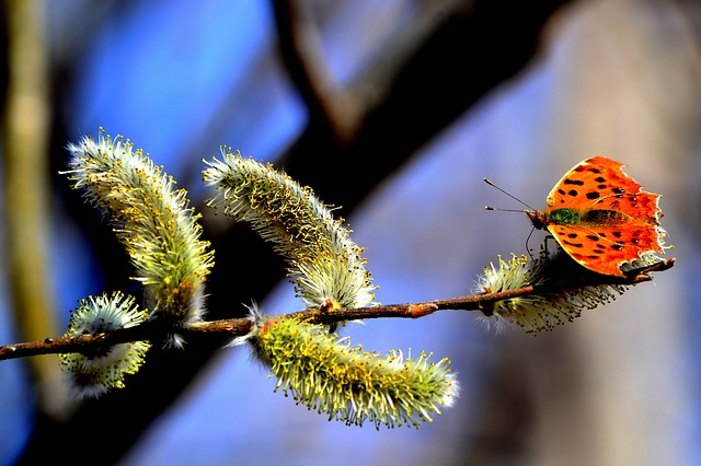 Butterfly, Branch, Spring, Insect, Nature, Verba