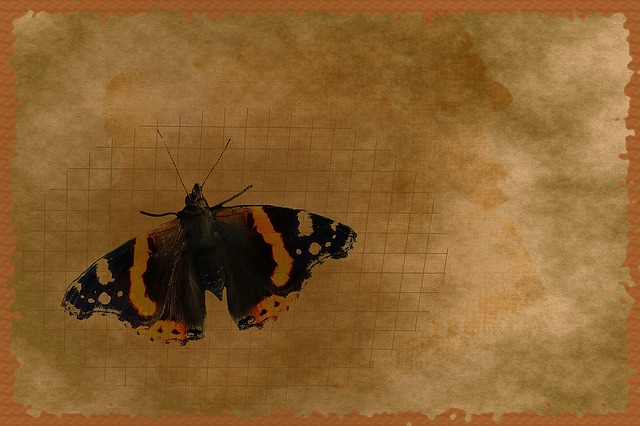 Stationery, Greeting Card, Background, Butterfly