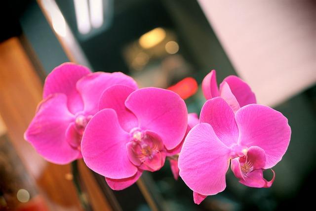 Orchid, Butterfly The Falkland Islands, Flower, Purple
