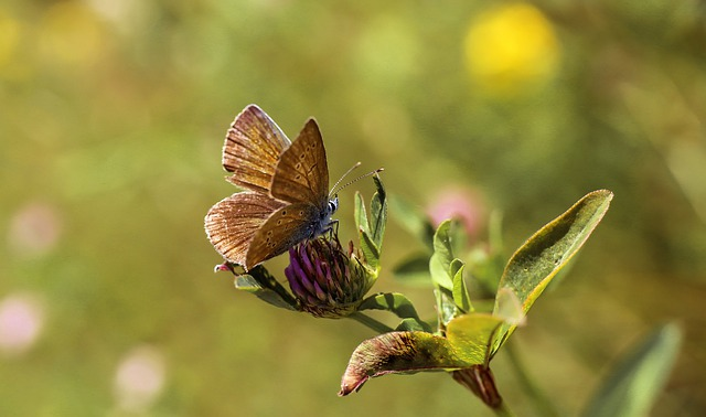 Butterfly, Insect, Wings, Nature, Macro, Summer