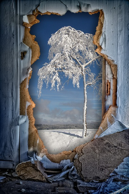 Winter, Tree, Wall, Hole, See Through, By Looking
