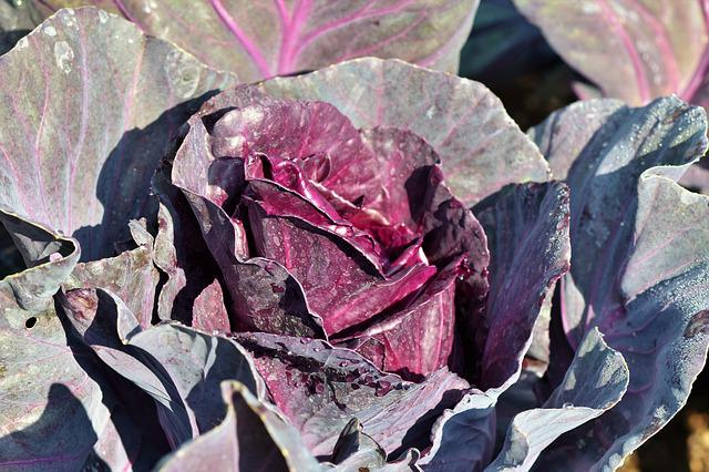 Red Cabbage, Kohl, Cabbage, Vegetables, Healthy
