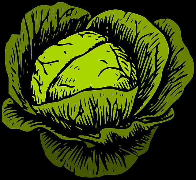 Cabbage, Green Cabbage, Vegetable, Vegetables