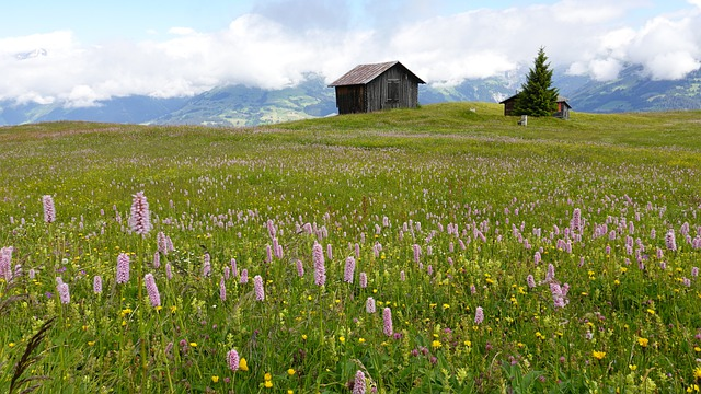 Flowers, Field, Meadow, Cabin, Hut, Cottage, Nature