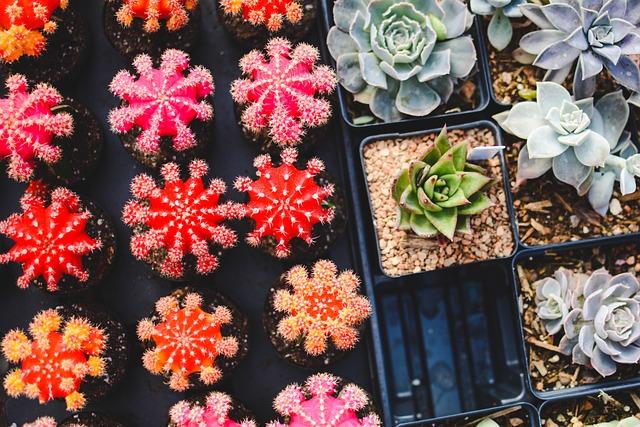 Cacti, Plants, Pot Plants, Succulent Plants