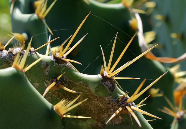 Cacti, Leaf Cactus, Plant, Thorns, Prickly Plant