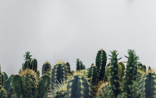 Cacti, Cactus, Cactuses, Plants