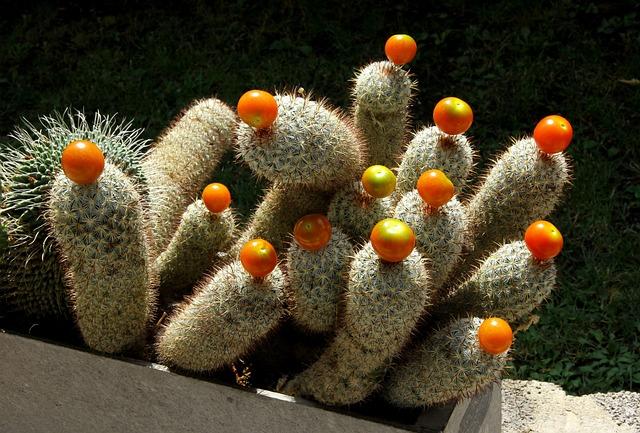 Cactus, Fruits
