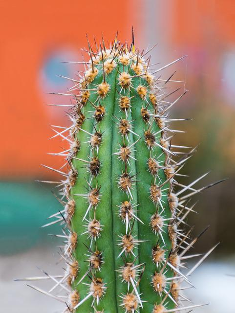 Cactus, Spur, Plant, Green, Prickly, Nature, Dry