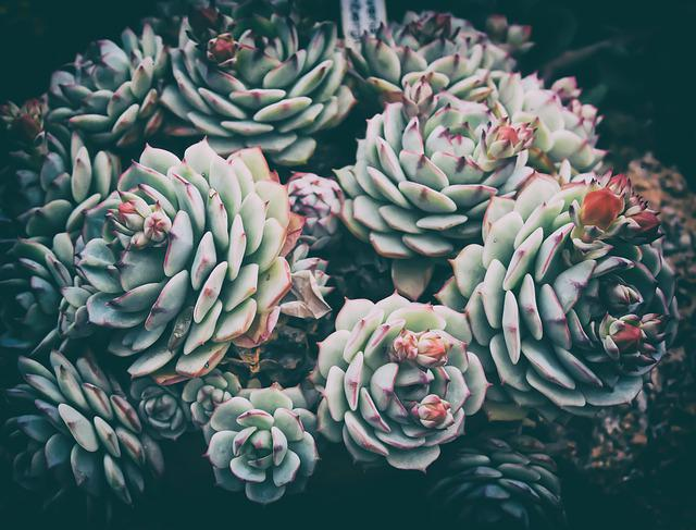 Cactus, Plant, Nature, Flora, Green, Prickly, Spur