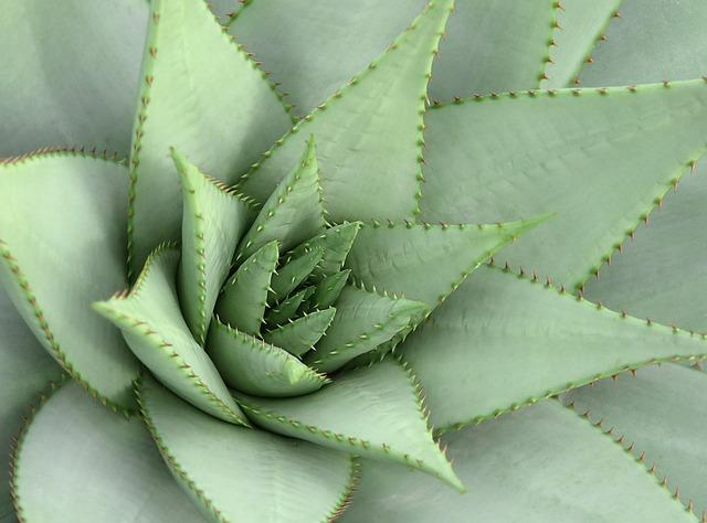 Plant, Spur, Cactus, Pointed, Cactus Greenhouse, Nature