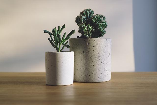 Cactus, Green, Plants, Pots, Succulents, Table