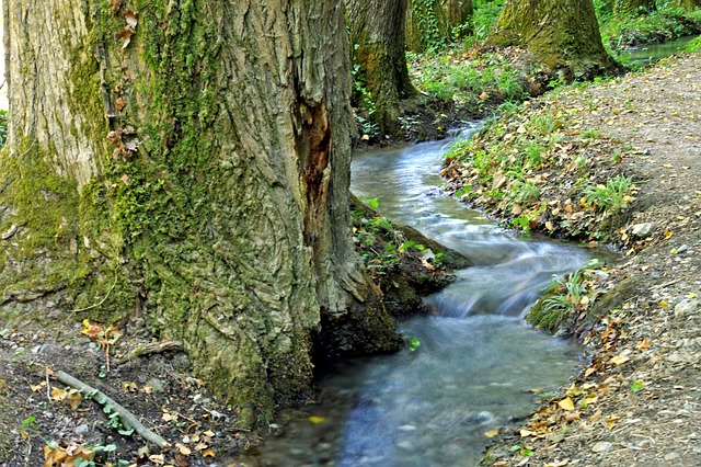 Stream, Water, Forest, Orsomarso, Calabria, Trees