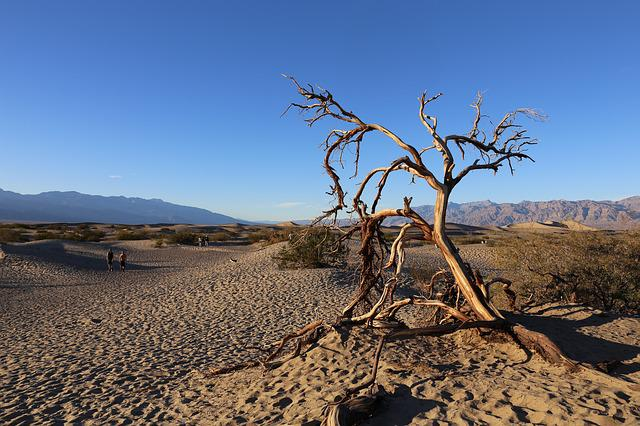 Death Valley, National Park, Dessert, Tree, California