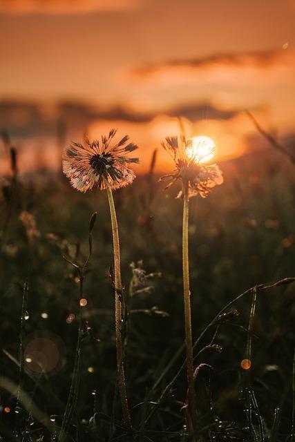 Sunset, Flowers, Call