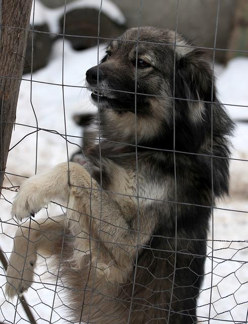 Dog, Fence, Calling, Pet