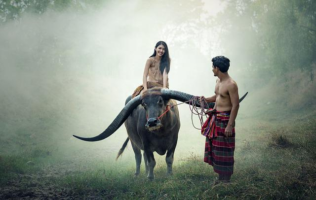 Asia, Buffalo, Cambodia, Cambodians, Girl, Riding