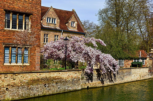 Blossoms, Canal, Cambridge, Flowers, River, Scenic