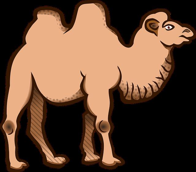Animal, Animals, Bactrian Camel, Camel, Tier
