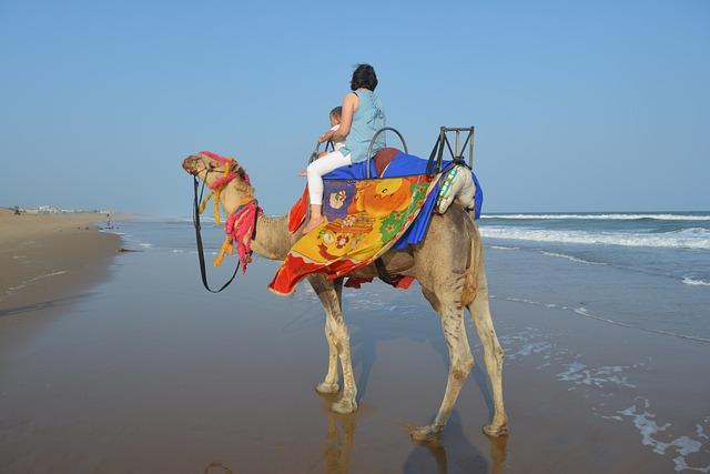 Camel, Camel At The Beach, Camel Ride, Beach Ride