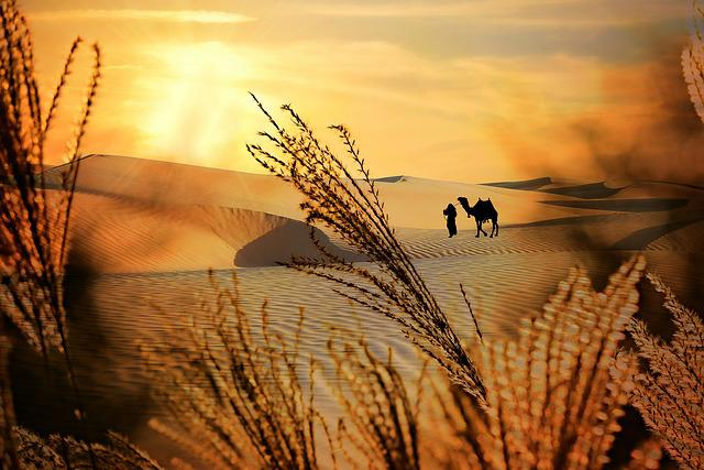 Plume, Plant, Desert, Dunes, Sand, Sunset, Camel