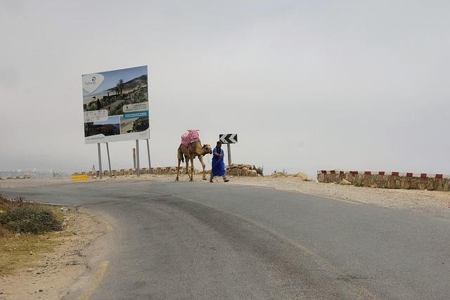 Taxi, Camel, Road, Run