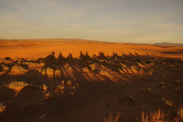 Shadow, Camel, Desert