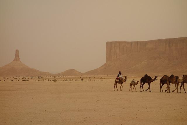 Camel Train, Saudi Arabia, Ramadan, Ramadhan