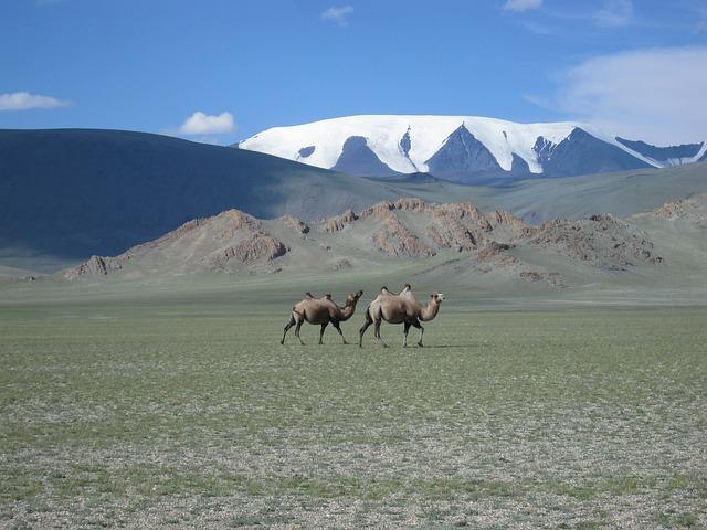 Mongolia, Glacier, Camels, Steppe