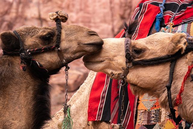 Camels, Petra, Jordan, Tourism, Travel, Vacations