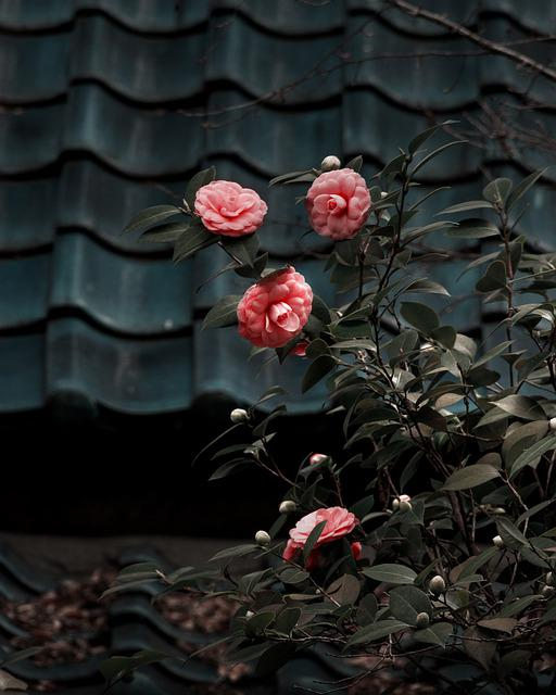 Camilla, Flower, Plant, Nature, Blossom, Spring, Garden