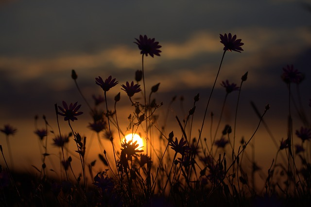Flowers, Camp, Sunset, In The Evening, Nature