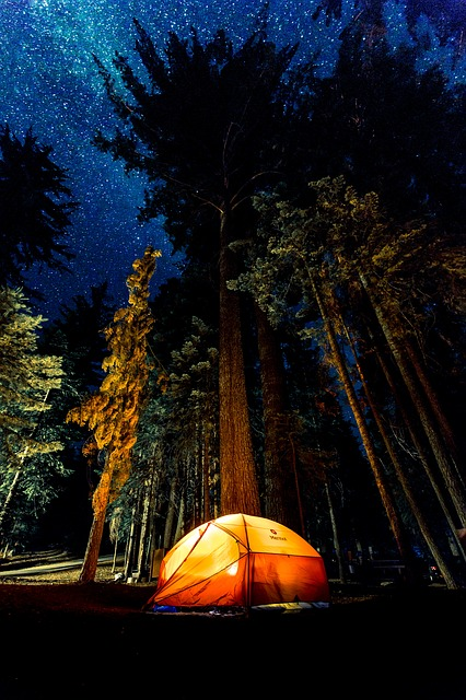 Camping, Dark, Forest, Light, Low Angle Shot, Outdoors