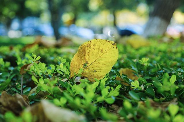 Campus, Autumn, Defoliation, Leaf, Ground, Yellow