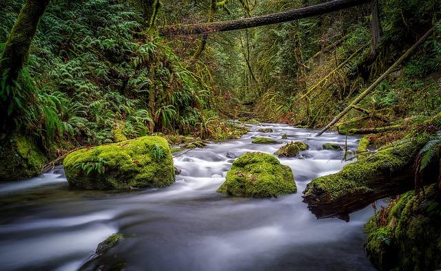 Canada, Landscape, Scenic, Nature, Outdoors, Stream