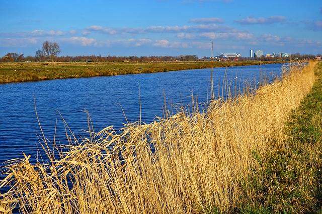 Canal, Waterway, Shore, Reed, Vegetation