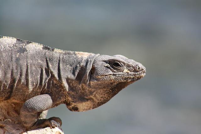 Lizard, Cancun, Iguana, Mexico, Tropical, Reptile