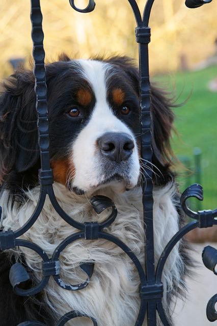Dog, Animals, Domestic Animal, Animal, Canidae, Race