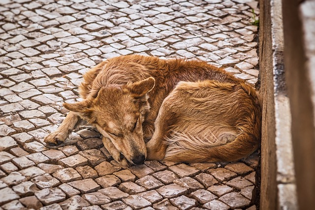 Dog, Street, Sleeping, Canine, Animal, Pet, Outdoor