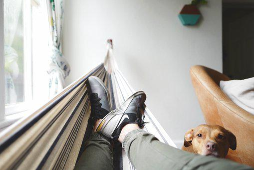 Canine, Cute, Dog, Footwear, Hammock, Indoors, Pet