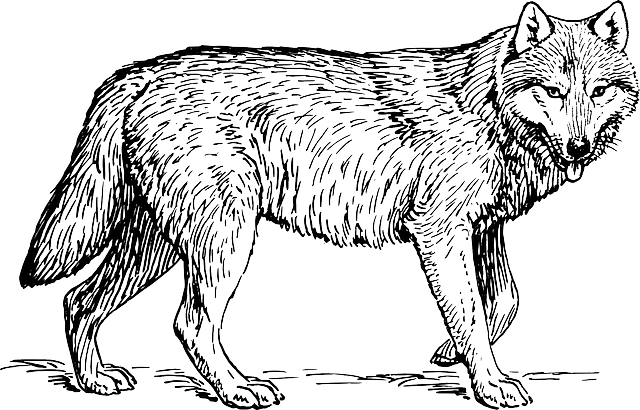 Wolf, Animal, Biology, Canine, Carnivore, Mammal